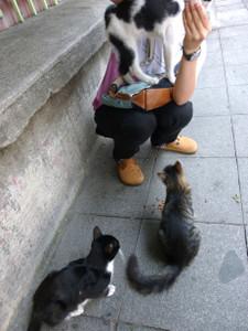 Cats2